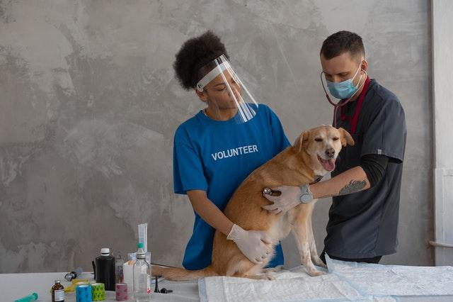בית חולים וטרינרי, פריצת דיסק אצל כלבים